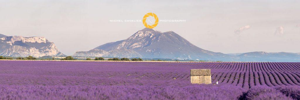 _MG_1036-Panorama